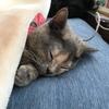 【埼玉から】猫をつれて厚木に引っ越しました!【神奈川へ】