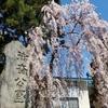 【黒石】5月の南津軽遠征の途中で【つゆやきそば】