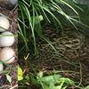 生物多様性に溢れる庭