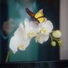 9月5日 面白いTV映像とカワイイ花