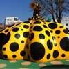 青森17オモシロ作品多数!十和田市現代美術館