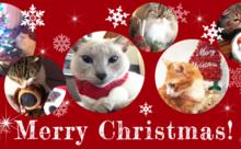 ネコ英語「ニャリー クリスマス」