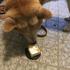 犬が誕生日なのでバースデーケーキをプレゼント