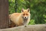 6月の旭山動物園。動物たちの自由な姿を撮る。
