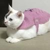 猫、母の手作り服を着る2