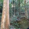 テーマの旅「ハイキングツアー初級 熊野三山・中辺路ハイキング」ハイキングの実際、熊野古道には計画を立てて