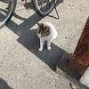 SLとネコさんに出会いました。