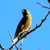 小春日和の手賀沼の鳥たち