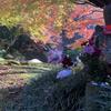 【YouTube 更新】今年一番の動画と自画自賛の明月院の紅葉