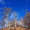 【西丹沢】檜洞丸 冬の静寂、大展望の犬越路