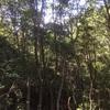 樹種転換を試みる〜林床に光りを〜