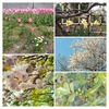 花咲く季節【つれづれ】20180623