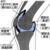 膝蓋跳動の方法と意義
