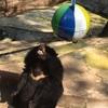 ヤンゴン動物園🐘🐅🐑