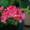 2013/05/12 花弁にギザギザ