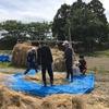 6月3週目 学外畑で菜種の収穫!