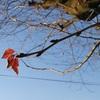 冬至の次の日、桜の花芽、グラマラス金魚