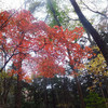 20111120_鞍掛山 その4