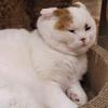 絵本の世界に迷い込む|吉祥寺プティット村の猫カフェ「てまりのおしろ」でもふもふタイム
