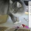猫の道具 ~破壊王むくの禁じられた遊び~
