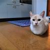 香箱座りの猫たち