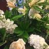 白色の花 爽やかさ