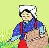 茶摘みだ茶摘み!新茶でがっぽり稼げや稼げ書き入れ時だ…