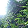 旬のパッションフルーツ