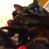今日の黒猫モモ&白黒猫ナナの動画ー754