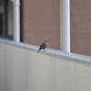 探鳥写真#23【おはるちゃんパパ写真撮影記録 part25】