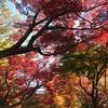 新宿御苑に紅葉を見に行く。近場で綺麗な紅葉を見れて満足。
