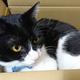 今日の黒猫モモ&白黒猫ナナの動画ー1061