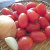 手作りトマトソースで