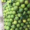 アンコールワット個人ツアー(148)バッタンバン観光ツアー のおすすめ オレンジ