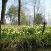 春のお花を楽しむ