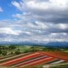 北海道鉄道旅行記 四日目② 滝川→美馬牛・四季彩の丘→旭川 映え映えな丘と、青い空