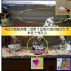 60cm規格水槽で飼育する海水魚の組合せを本気で考える
