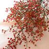 野バラの実~季節の生花