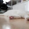 【63本目】猫の毛はスパイス