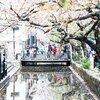 春の京都は観光に最適!先斗町〜京阪中書島駅〜伏見稲荷大社を散歩してみた
