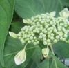 五月の庭の花