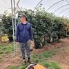 【オーストラリア】【ファームジョブ】タスマニアで初仕事!ブラックベリーピッキングって稼げるの?難しい?
