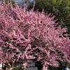 春の大阪・京都を観光する