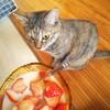 【猫とアシナガバチ】ハッチー危ないから網戸張り替えた。