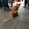 旅と猫の写真が1万枚オーバー
