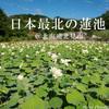 【旅フォト】日本最北の蓮池!北海道北見市の鏡池の写真たち。