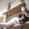 「脱力系ネコ」は夏の風物詩