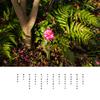枯木立 花を探して 出会う山茶花