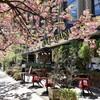 八重桜を愛でながらパリのカフェな雰囲気のランチ