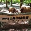 箱木千年家に行って、昔の人はどんな生活をしていたのか知りたかったが休みだった。アジサイには早いが森林植物園で森林浴ができた❣